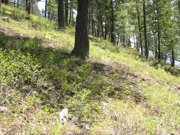native plant restoration hillside