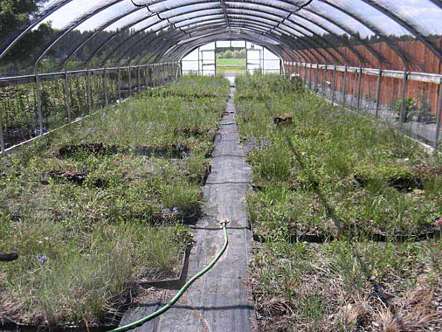 June-2009-Plants-in-Storage