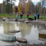 Dog Park Landscape Design