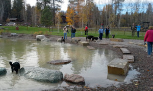 Dog Park Landscape Design