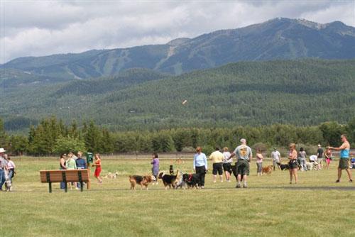 Dog Park, Wag, Whitefish Montana