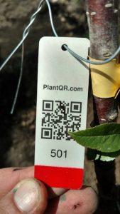 Plant QR tags
